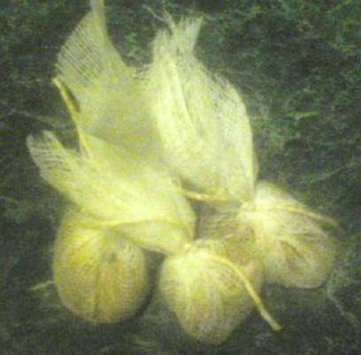 tempero de bouquet garni
