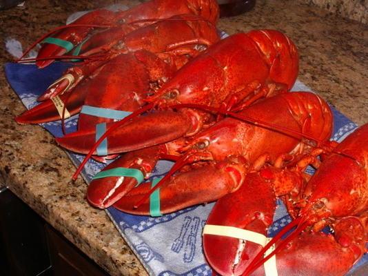 lagostas cozidas de maine
